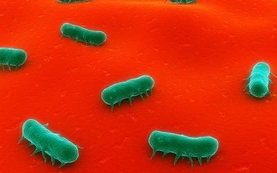 Bacillus Toxin (Cereulide) Testing